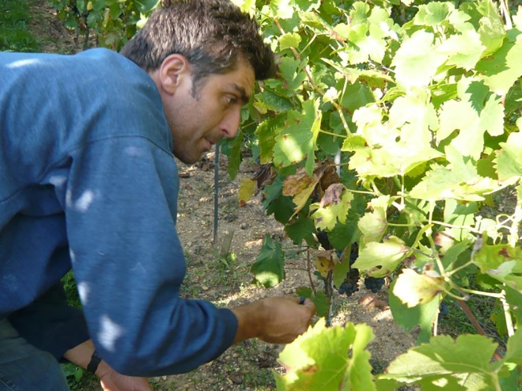 domaine Elian Da Ros vin bio